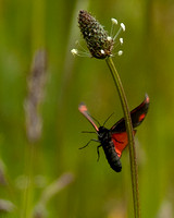 Little Red Butterfly